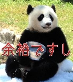 yoyupanda.jpg